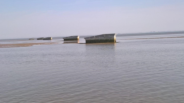 Biodiversitätsforschung im Wattenmeer