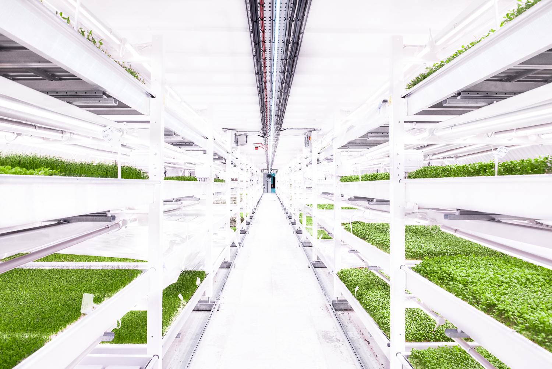 3.Eine vertikale Farm, die in frühere Industriegebäude gebaut werden kann.