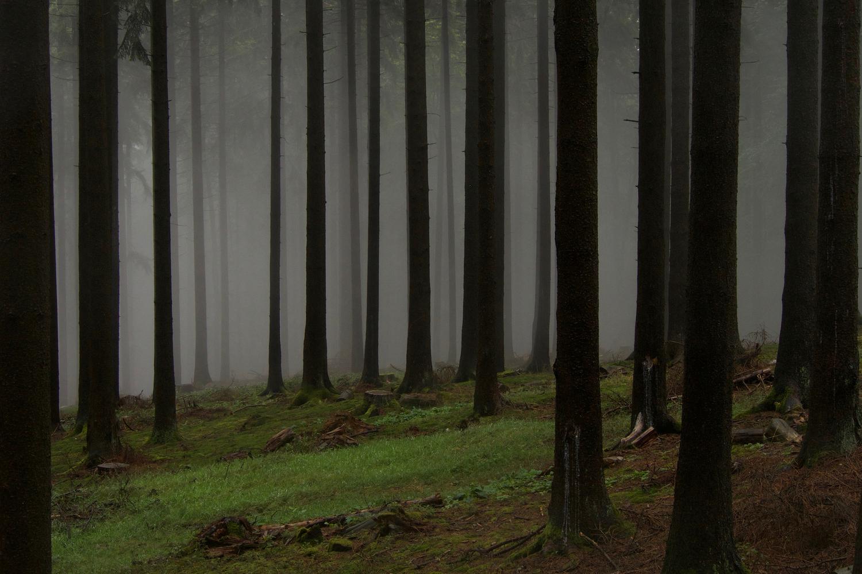 Fichtenwald (Picea abies). Nadelwälder werden häufig zur Holzproduktion genutzt und haben eine niedrige strukturelle Hererogenität (vertikal und horizontal).