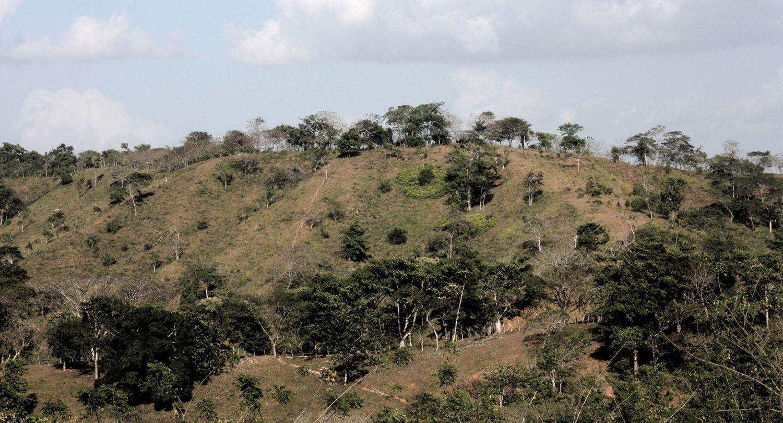 Viehweiden mit isolierten Bäumen im Zentrum Panamas. Auf diesen verlassenen Weiden beginnen die tropischen Wälder, sich zu regenerieren und werden zunächst von schnell wachsenden Pionierarten (in den feuchten Tropen) dominiert.