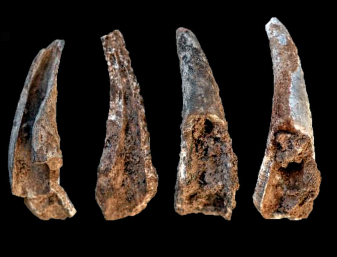 Aufgebrochene und verbrannte Fragmente von Zangen des Krebstiers Cancer pagurus.