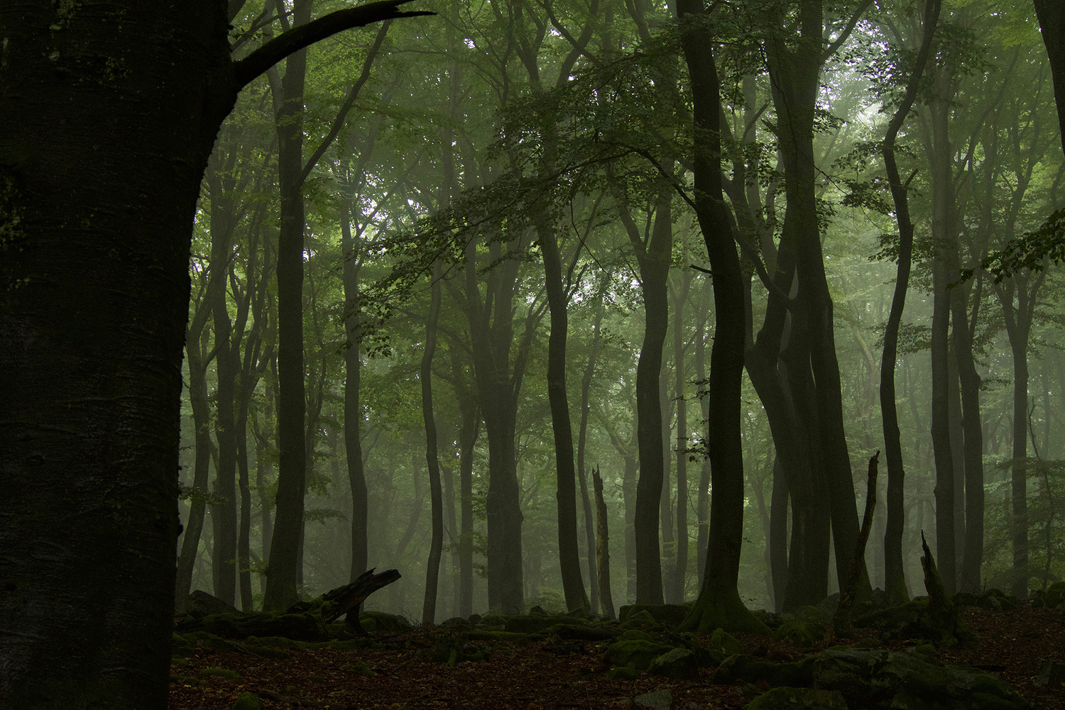 Beech forest (Fagus sylvatica). Beech forests, not currently managed, usually have large canopies and a high structural heterogeneity (vertical and horizontal).