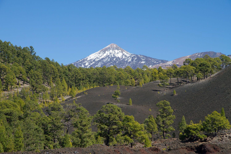 Pflanzen-Checklisten für geografische Regionen wie die Insel Teneriffa bilden die Grundlage für die GIFT-Datenbank. Hier kommen 630 einheimische Pflanzenarten vor, von trockenen Küstenbüschen bis hin zur alpinen Vegetation des Teide.