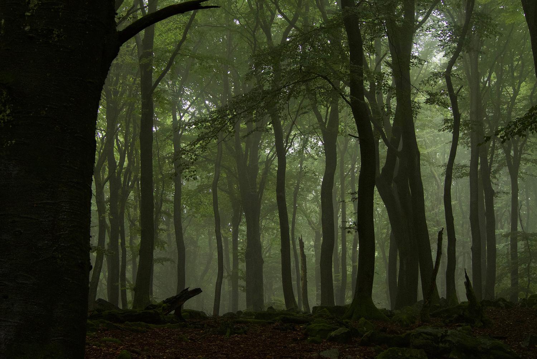 Buchenwald (Fagus sylvatica). Buchenwälder, gerade nicht bewirtschaftete, haben meist grosse Laubdächer und eine hohe strukturelle Heterogenität (vertikal und horizontal).