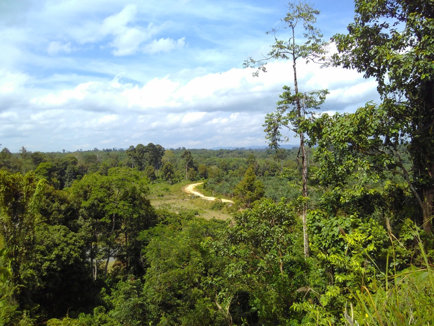 View from the Muara Sekalo village towards the Thirty Hills National Park in Indonesia
