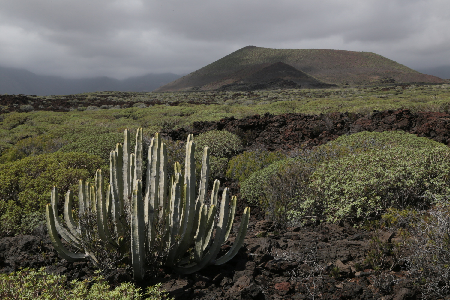 It isn't just differences in climate and geology, but also the availability of symbionts such as the mycorrhizal fungus, that influence plant diversity at different locations, for example on the dry east coast of Tenerife.
