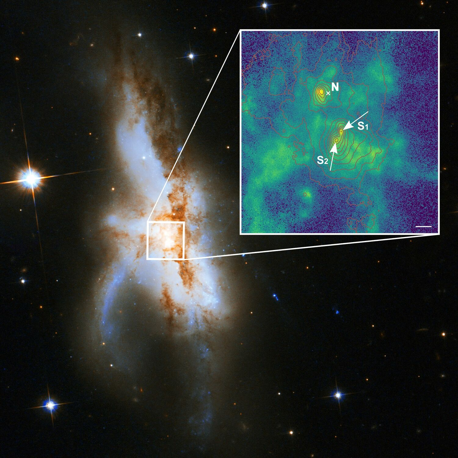 The irregular galaxy NGC 6240. New observations show that it harbours not two but three supermassive black holes at its core. The northern black hole (N) is active and was known before. The zoomed-in new high-spatial resolution image shows that the southern component consists of two supermassive black holes (S1 and S2). The green colour indicates the distribution of gas ionized by radiation surrounding the black holes. The red lines show the contours of the starlight from the galaxy and the length of the white bar corresponds to 1000 light years.