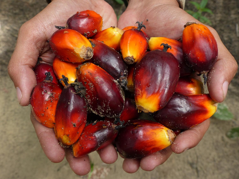 Viele Produkte, die wir täglich verwenden, wären ohne bezahlbares Palmöl teurer.