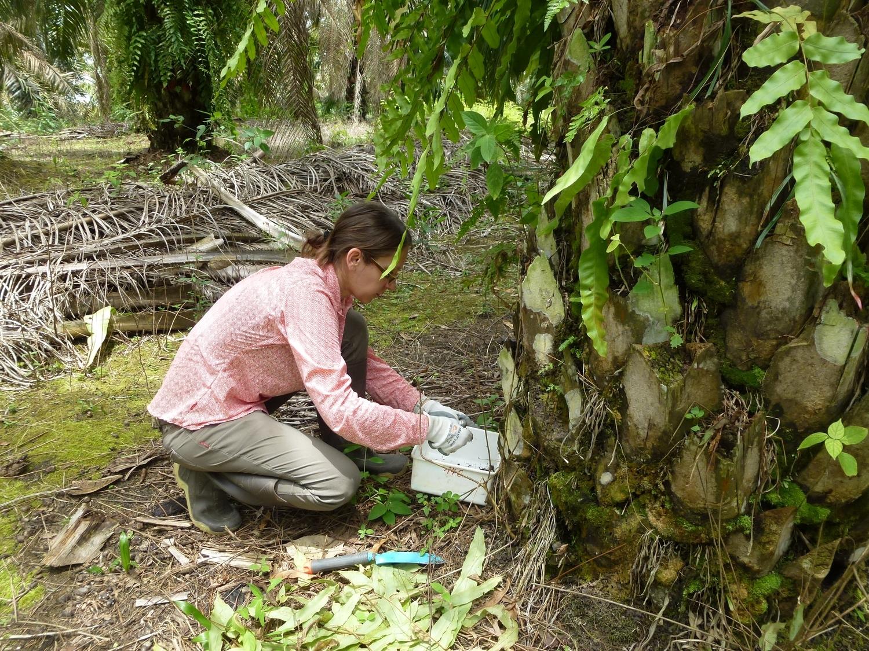 Dr. Valentyna Krashevska sammelt Proben von Organismen zur Analyse. Das Team sammelte über 55.000 lebende Organismen, darunter Ameisen, Würmer, Larven, Tausendfüßler, Milben, Nematoden und einzellige Mikroorganismen aus sechs verschiedenen Mikrolebensräumen.