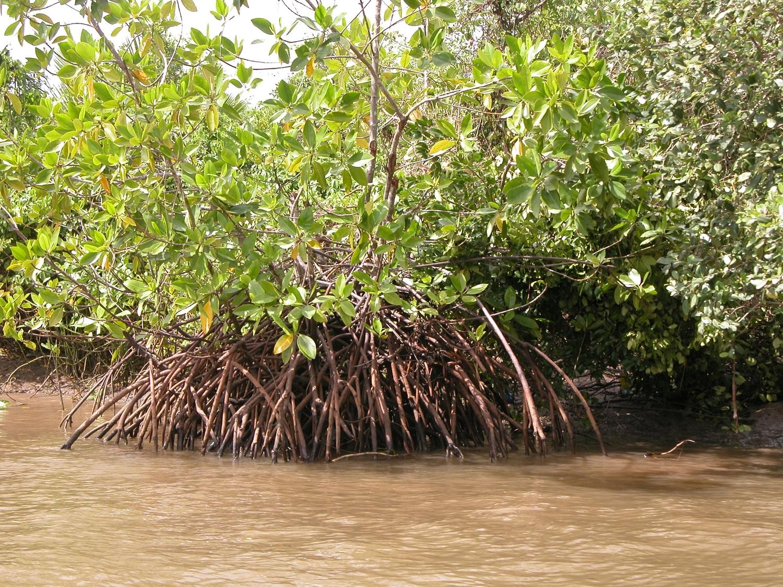 Die von Mangroven gesäumte Segara Anakan Lagune in Java, Indonesien, ist ein wichtiger Speicher für Kohlenstoff.