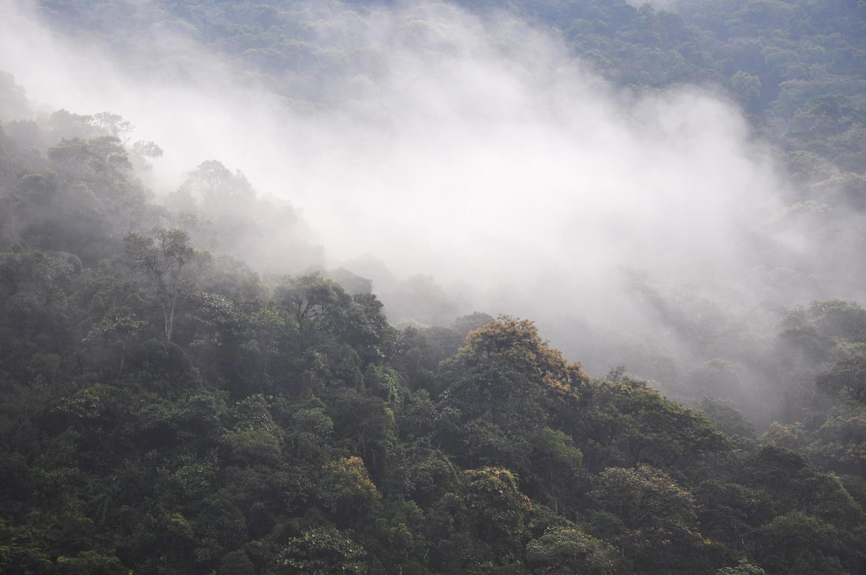 Artenreicher tropischer Bergregenwald (Reserva San Francisco, Ecuador, 2000m).