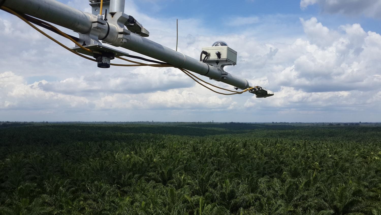 Blick vom Flux-Turm über die Ölpalmenplantage in Jambi, Indonesien.