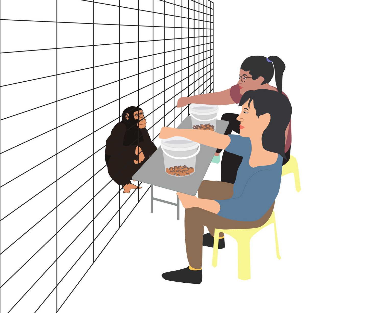 Versuchsanordnung: Forscherinnen und Forscher stellten Schimpansen vor die Wahl, aus welcher von zwei Futtermischungen sie eine Kostprobe haben wollten.