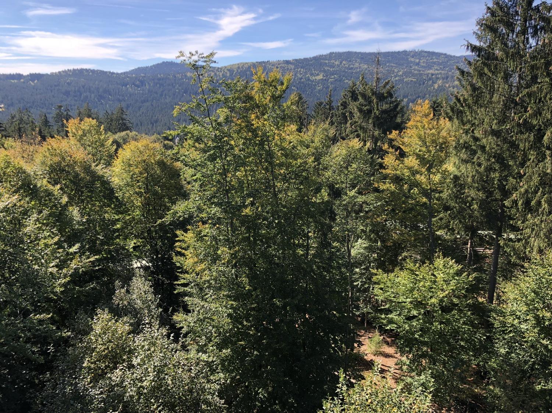Der Wald ist ein Ökosystem mit vielen verschiedenen Funktionen.