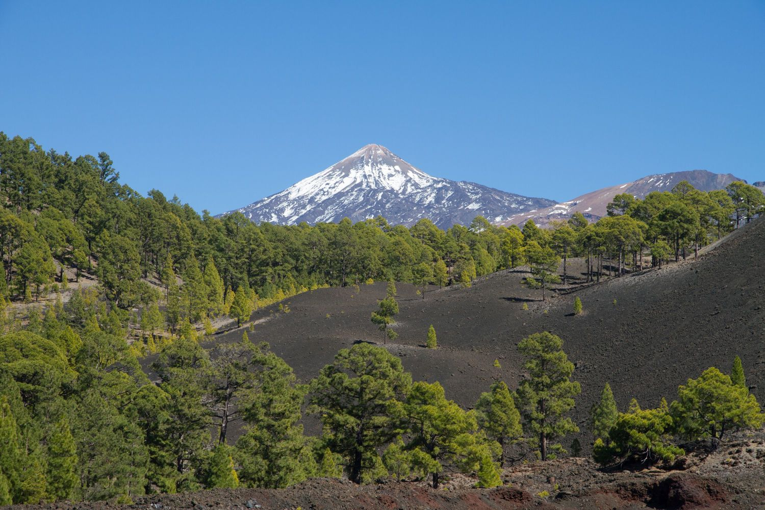 Plant checklists for geographic regions like the island of Tenerife form the basis of the GIFT database. Here 630 native plant species occur from dry coastal scrublands up to the alpine vegetation of Mount Teide. Around 120 of the species only occur on this particular island and more than 300 species are restricted to the Canary Islands.