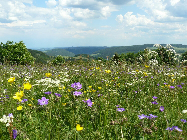 Extensiv bewirtschaftetes, artenreiches Grünland im Thüringer Wald.
