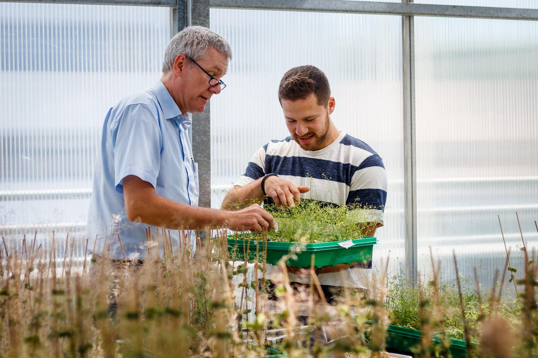 Prof. Ivo Feußner lässt sich den Wachstumsstand der Pflanzen von Dmitrij Rekhter zeigen.
