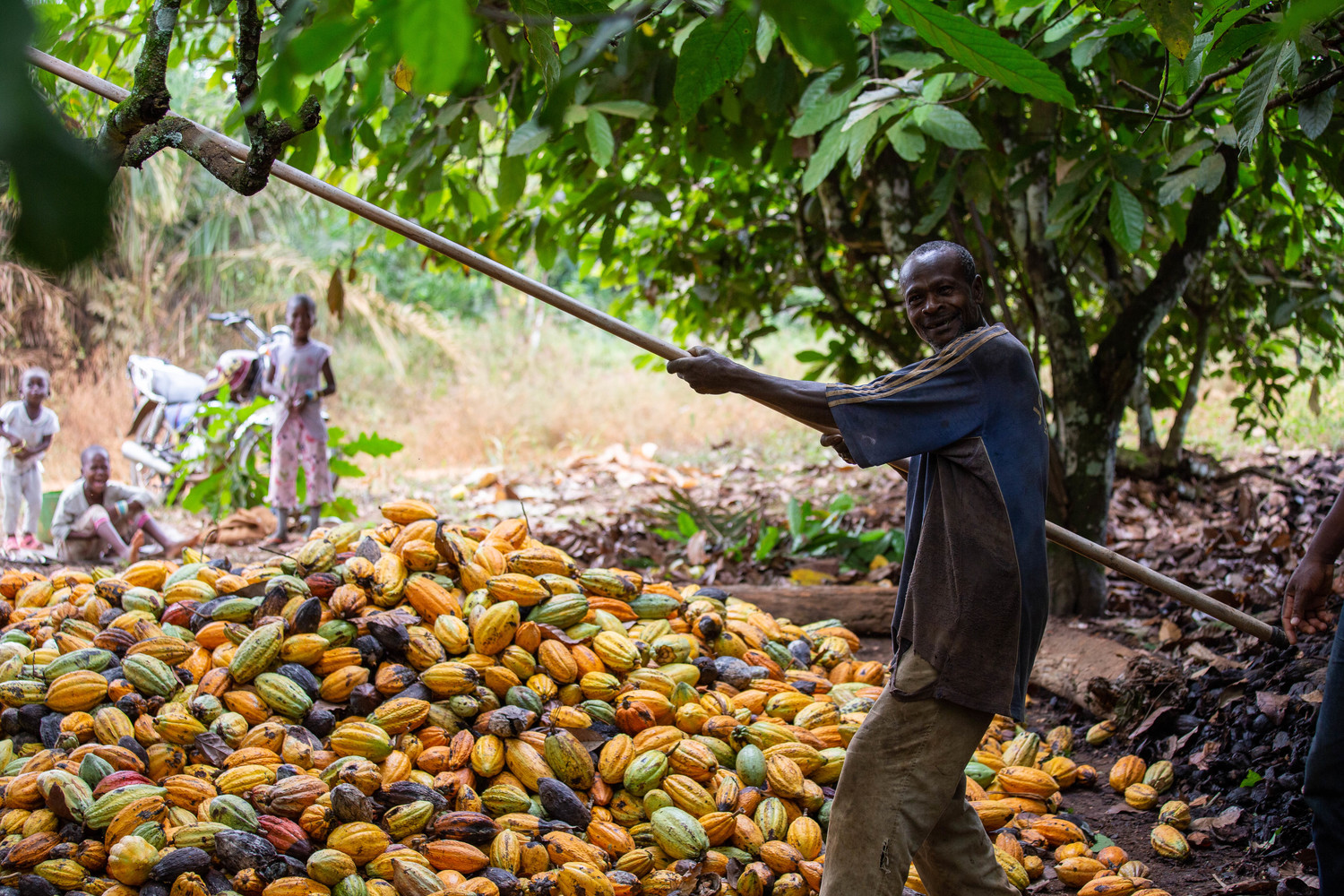 Farmworker in the cocoa sector of Cote d'Ivoire