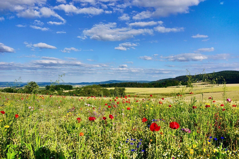 Biologische Vielfalt in der Landwirtschaft. Laut den Forschern schwächen die EU-Reformpläne den Umweltschutz.
