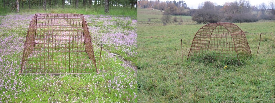 Using grazing baskets to keep the deer out temporarily, researchers can work out how much bio-mass the wild grazing animals have taken in over a certain period of time (left heath, right grass-land).