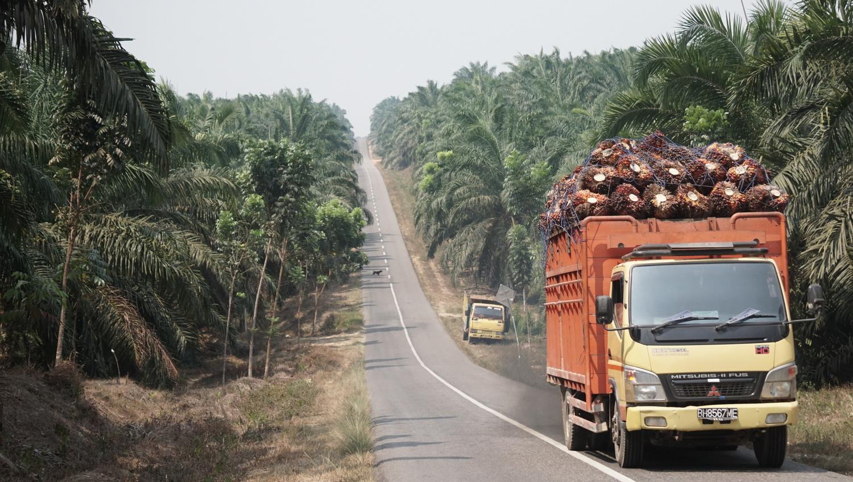 Ein mit Ölpalmfrüchten beladener Lkw fährt durch die Ölpalmenplantage in der Provinz Jambi, Sumatra (Indonesien).