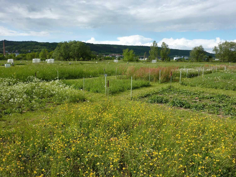 Grassland experiment