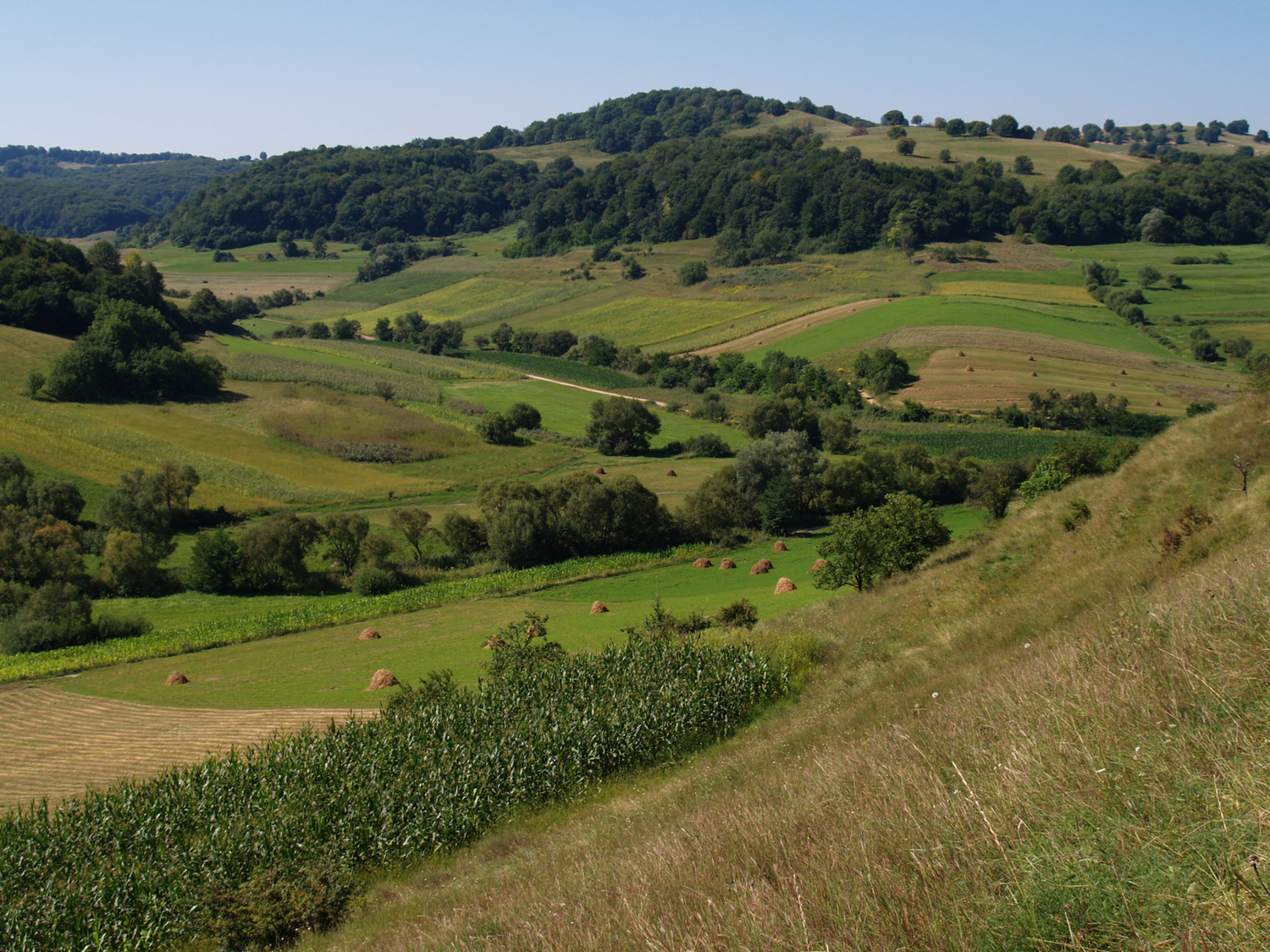 A structurally rich agricultural landscape (Romania) can promote biodiversity.