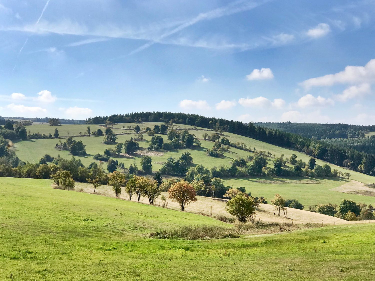 A mosaic landscape in the Erzgebirge. The Common Agricultural Policy of the EU determines the future of biodiversity and farmers in such rural areas.