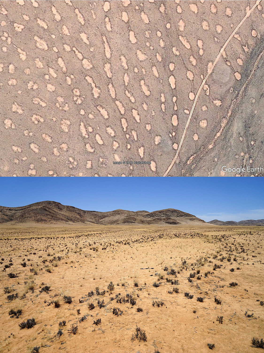 Oval-shaped mega fairy circles form a chain-like structure along a drainage line in Namibia.