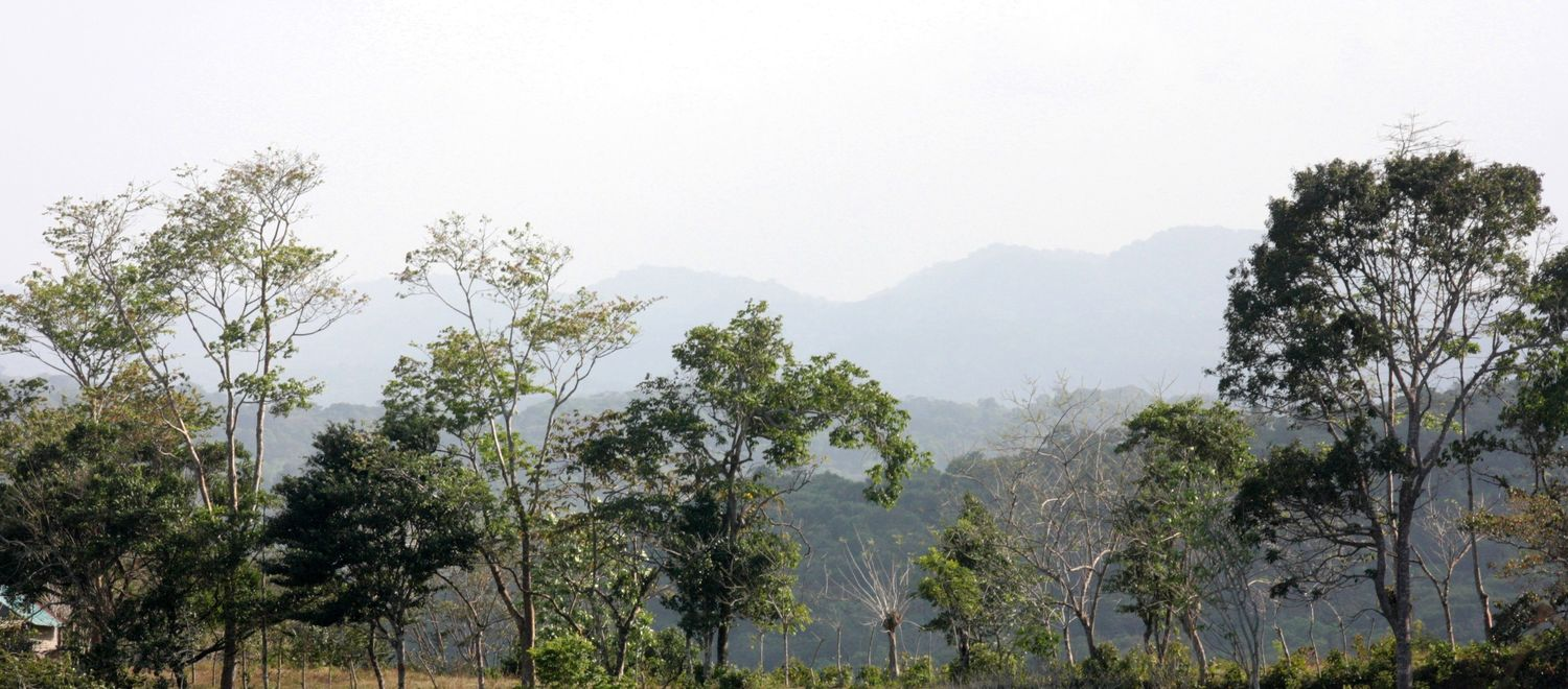 A human-dominated landscape in central Panama, showing the progression of regenerating forests from cattle pastures (foreground) to older secondary forests (background).