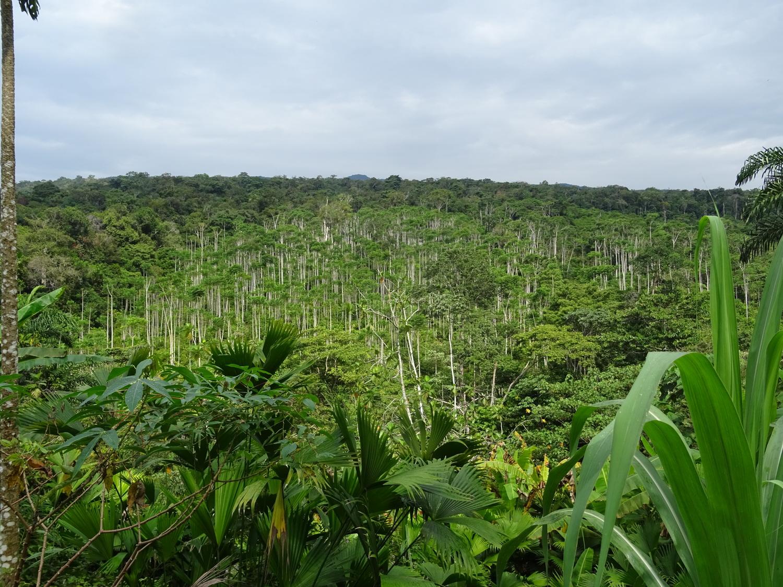 Tropische Landschaft mit gut beschatteten Kakao-Agroforst-Anbausystemen in Peru nahe der Stadt Cusco.