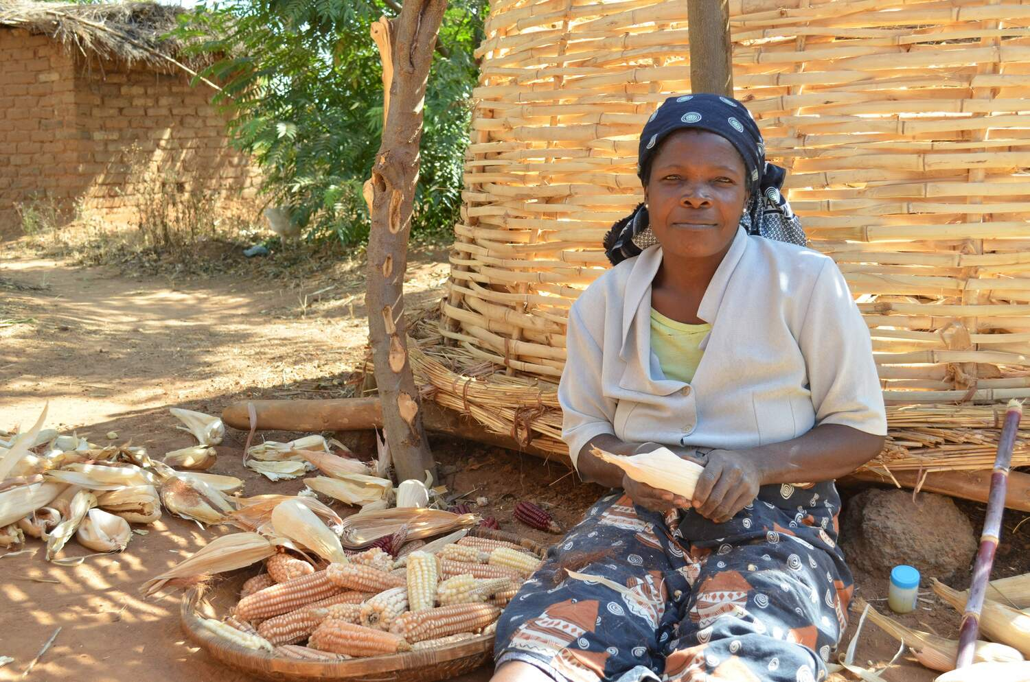 Maize (corn on the cob) is the most important staple food in large parts of Africa. Maize preparation in rural Malawi.