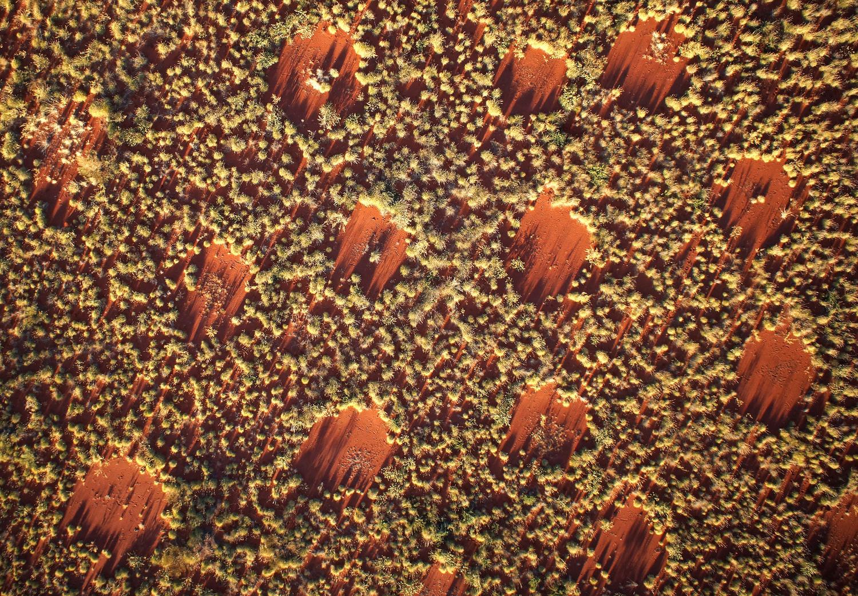 Drohnenbild der australischen Feenkreise, aufgenommen in einer Flughöhe von 40 Metern. Die Lücken haben einen ungefähren Durchmesser von vier Metern, das räumlich periodische Muster ergibt sich aus annähernd gleichen Abständen zwischen den Zentren der nächstgelegenen Lücken. Diese Untersuchungsfläche brannte 2014 ab, die nachgewachsenen Spinifexgräser waren zwei Jahre und acht Monate alt.