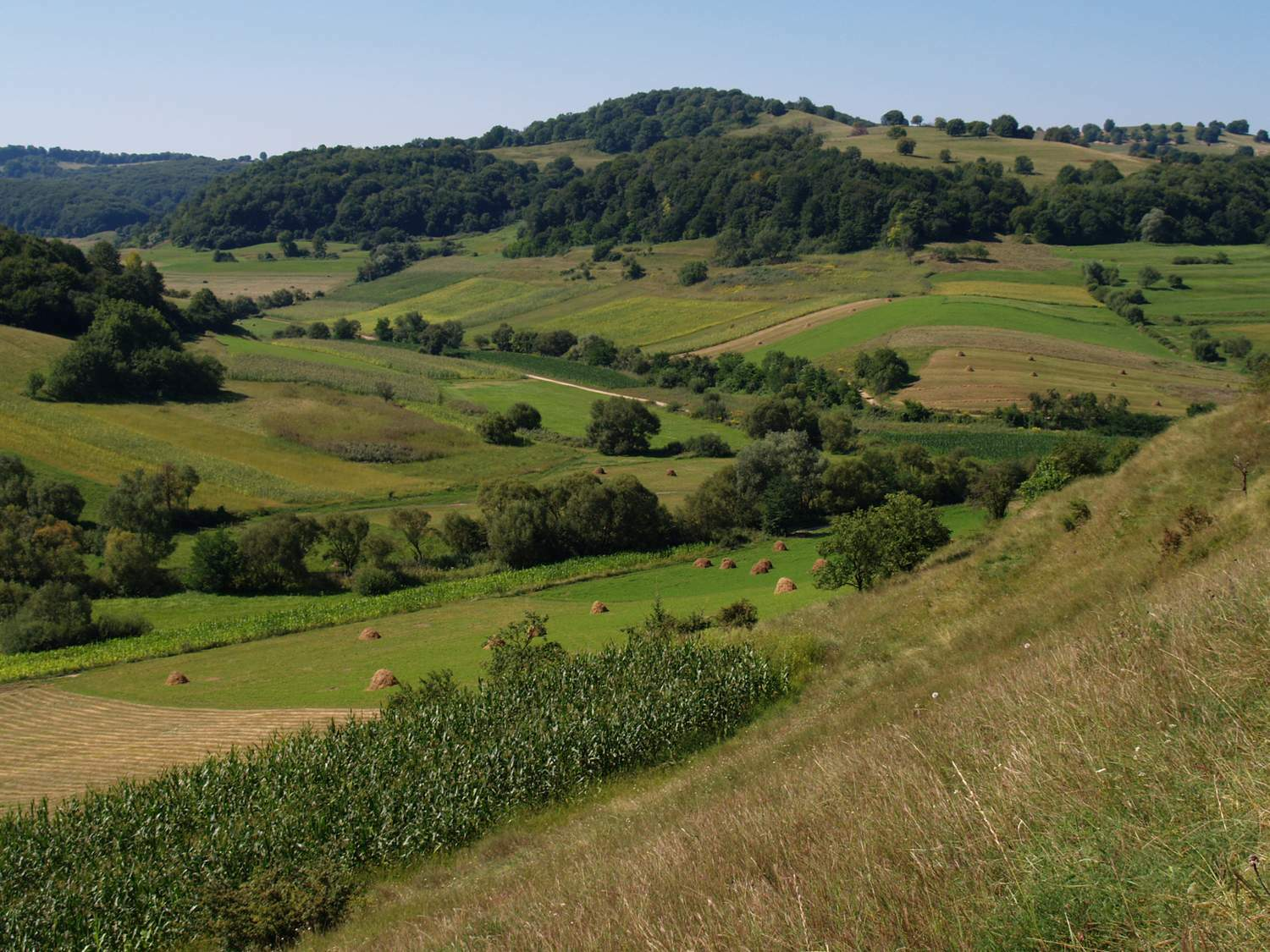 According to the authors, a landscape mosaic of natural habitats and small-scale and diverse cultivated areas are the key to promoting biodiversity on a large scale in both conventional and organic agriculture.