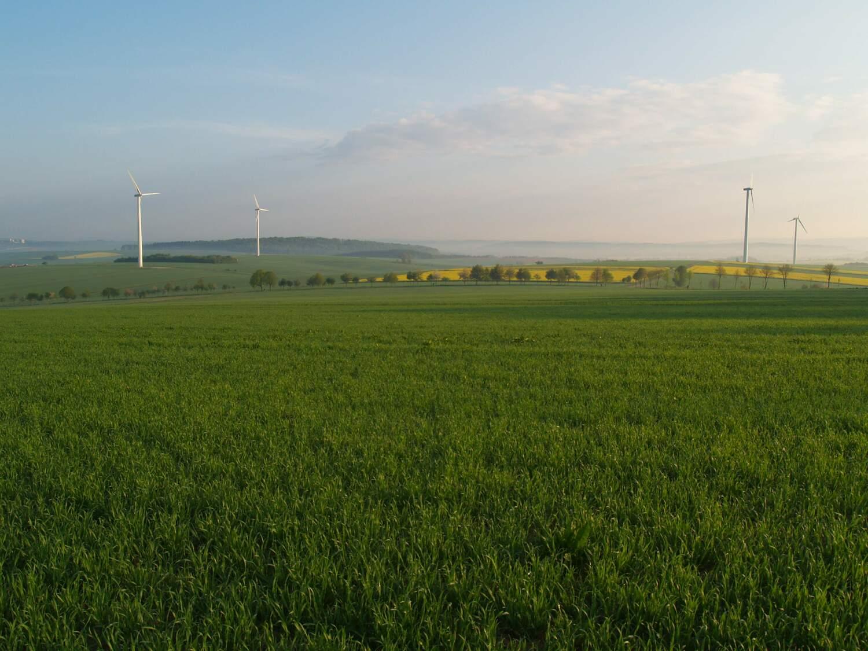 Strukturarme Landschaft bietet wenig Lebensraum für verschiedene Arten.