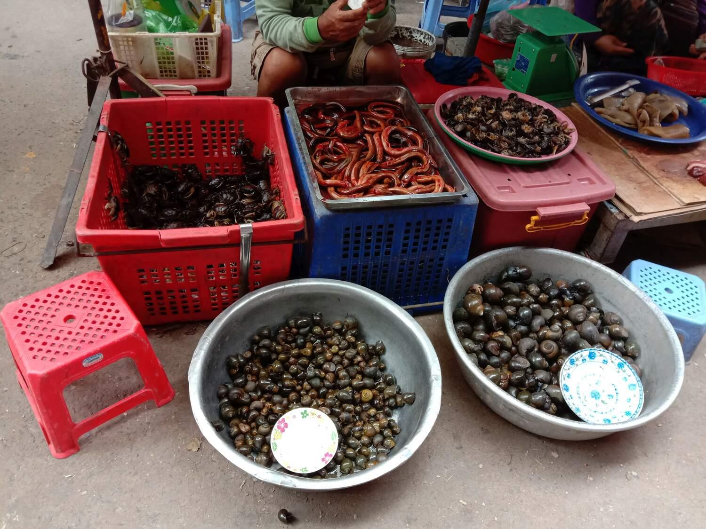 Marktgeschäft in Kambodscha: Eine Verringerung der Interaktion zwischen Mensch, Wild und Vieh sowie ein wirksamer Schutz von Lebensräumen und Wildtieren ist die einzige Möglichkeit, das Risiko künftiger Zoonosen zu verringern.