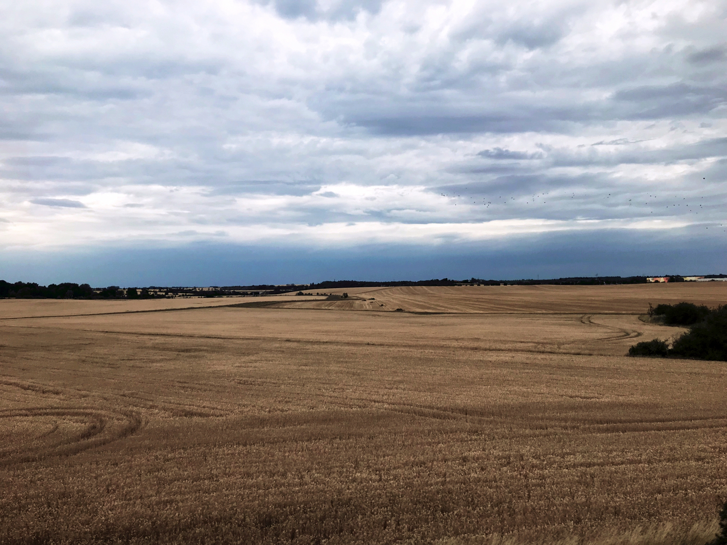 Monotonous landscapes created by agricultural intensification. The CAP reform proposed by the EU risks the expansion of such landscapes, according to the scientists.