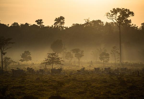 Die Umwandlung von Regenwald in Weideland im brasilianischen Amazonasgebiet.