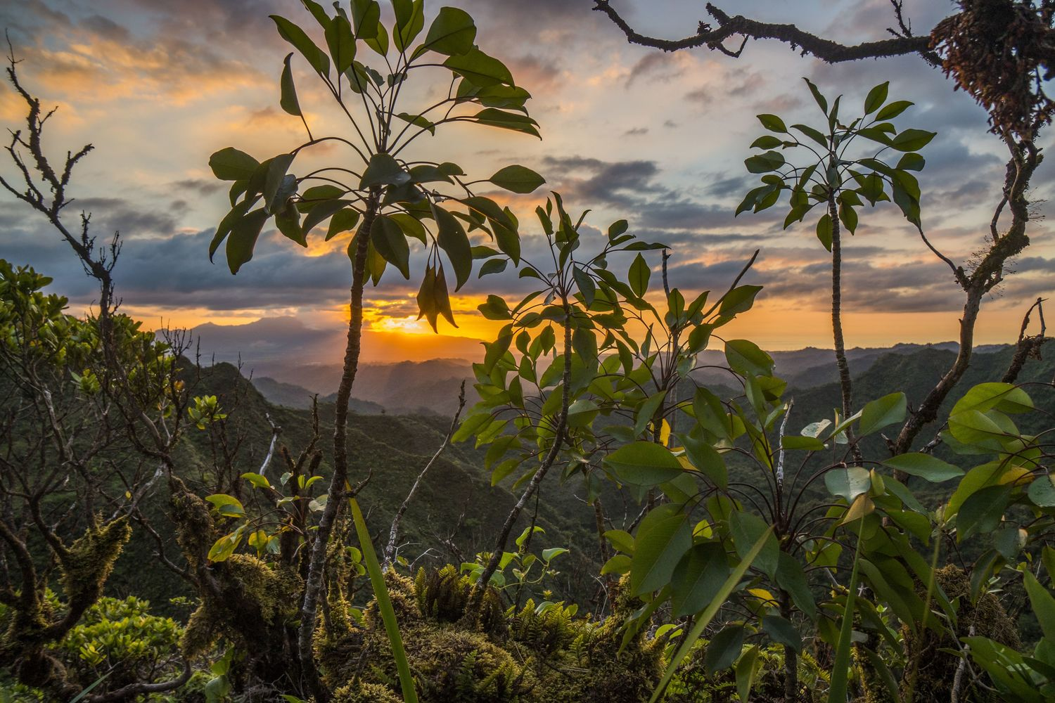 Ko'olau Mountain range on Oahu - the third largest of the Hawaiian Islands. Researchers investigated the effects on biodiversity of introduced species and island age.
