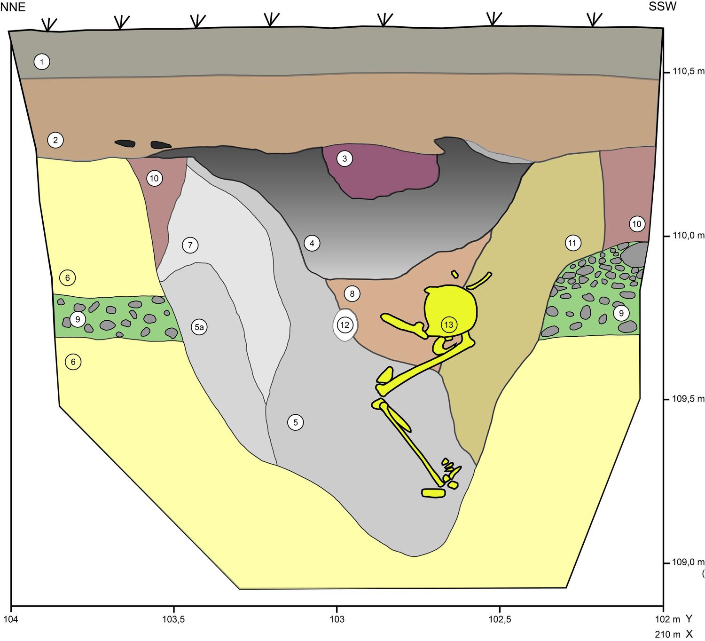 Das Profil der Grabgrube des 2014 auf dem Weinberg dokumentierten Grabes lässt keinen Zweifel: Der junge Mann wurde ursprünglich in aufrechter Position beigesetzt, doch nur die Beinknochen sind noch annähernd in anatomisch korrekter Position.