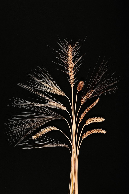 Spektrum der Vielfalt bei Gerste und Weizen