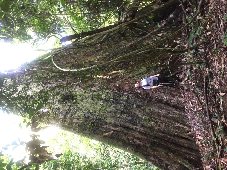 Dr. Martin Ehbrecht untersuchte unter anderem den tropischen Regenwald auf Borneo.