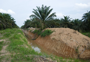 A recently constructed flood protection dam located on an industrial oil palm plantation.