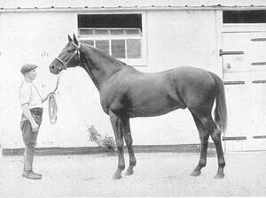 Dark Ronald XX was a stallion who significantly influenced the breeding lines.