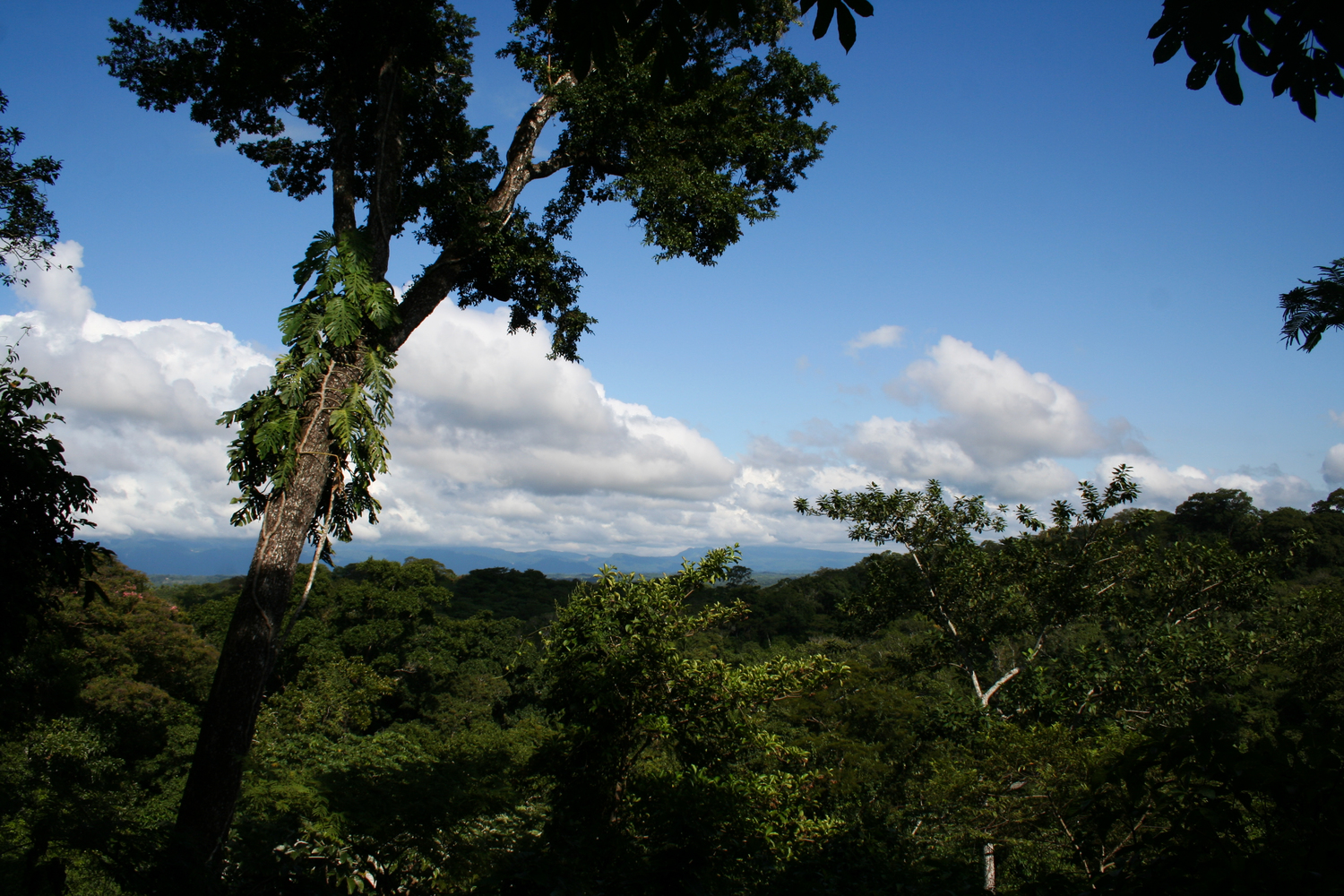 The nearer to the equator, the more frequently the plant-fungus symbiosis occurs - for example in the species-rich tropical rainforest of the Amboró National Park in Bolivia.