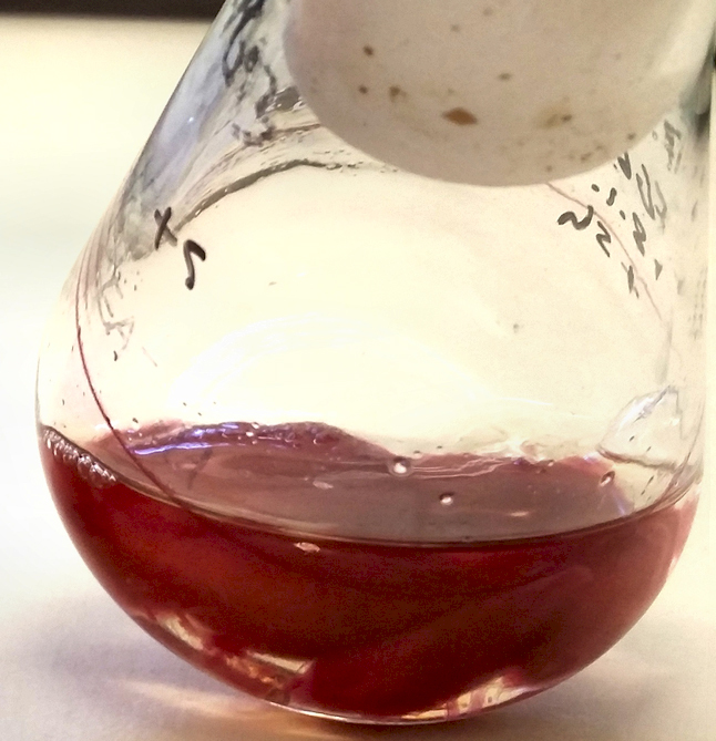 Mycelium of the fungus Fusarium graminearum (coloured red by Aurofusarin) growing in a liquid culture medium.