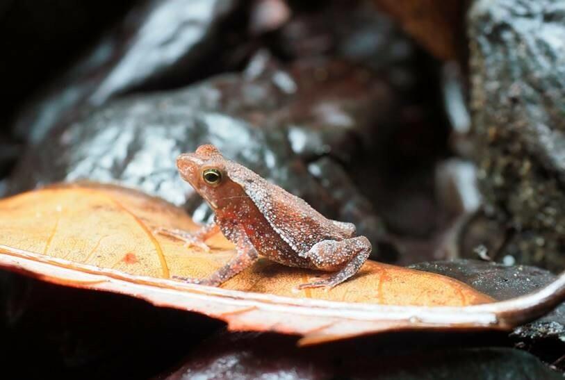 Agrobiodiversität: Amphibien sind wichtige Störungsmelder in Agrarlandschaften.