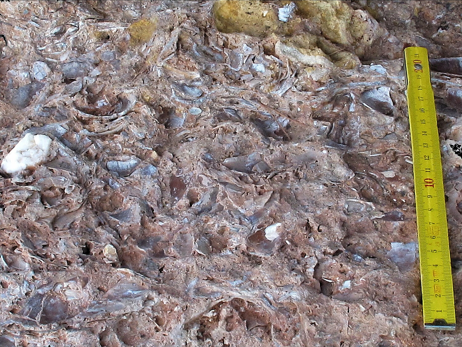Horizontal view of a mussel shell bed.