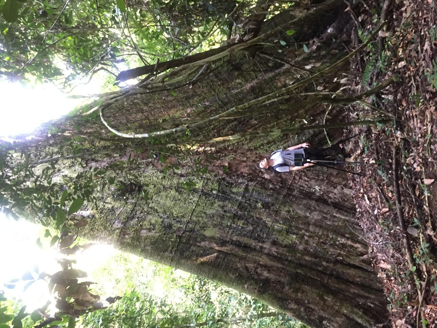 Dr Martin Ehbrecht studied the tropical rainforest in Borneo, in addition to many other areas.