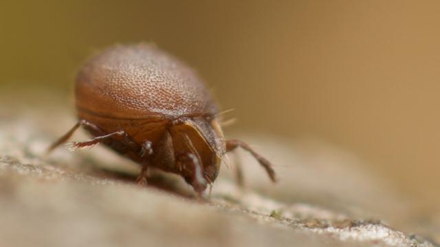 Viele einzelne Lebewesen wie diese winzige Milbe wurden im Rahmen der Analyse gesammelt.